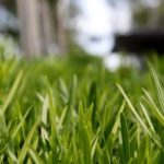 Yard Maintenance: How to Prepare Your Garden and Lawn for Winter