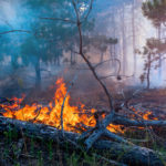 The Impact of Forest Fires on Air Pollution