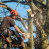 7-Reasons-Why-Tree-Removal-Is-an-Eco-Friendly-Idea-acw-anne-cohen-writes