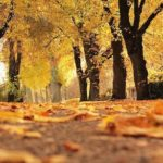 Comfy in the Fall: 4 Ways to Make Your Home a Haven