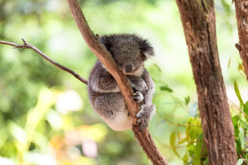 sydney-australia-anne-cohen-writes-acw