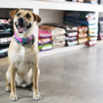 Good Reasons to Choose Dog Food Delivery