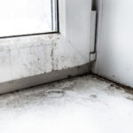 Have You Found Mold in Your Home? Here's What You Should Do Next
