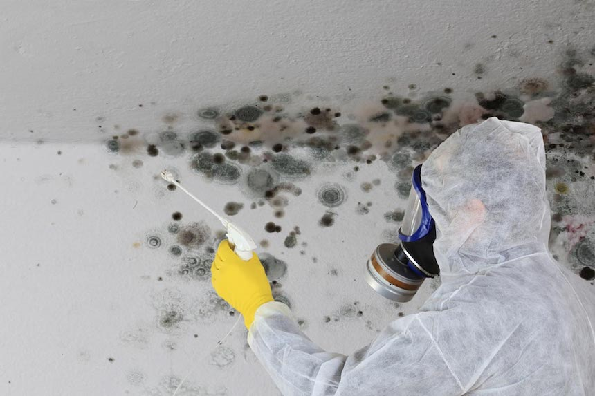 5-dangerous-types-mold
