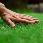 A Quick Lawncare Guide to Weed Removal