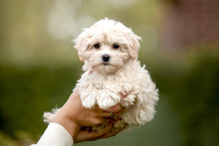 5-types-puppies-perfect-first-time-dog-owners